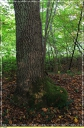Foret_de_Chantilly_-_Brichebay_Senlis_-_IMG_0066.JPG
